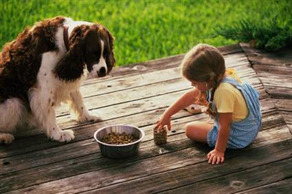 Pet food franchise guide