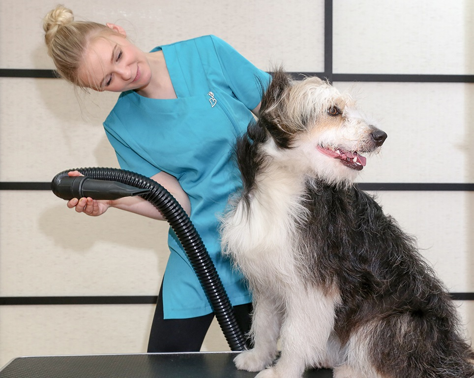 Pooch Dog Spa franchises available now!